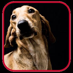 koula-dog